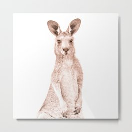 Joey - Kangaroo Australia Metal Print