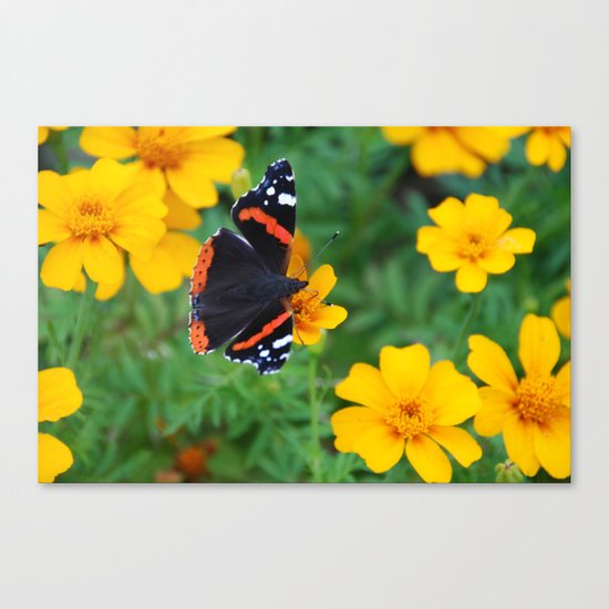 Red Admiral Butterfly on Marigold Canvas Print