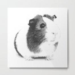 Grey guinea pig Metal Print