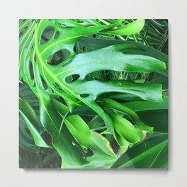 Fine Art Exquisite Palm Leaves Close-Up Photo Metal Print