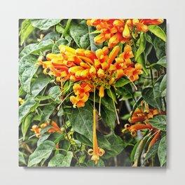 Spectacular orange trumpet flower Metal Print