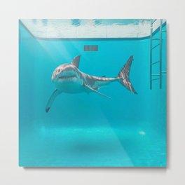Shark in the pool Metal Print