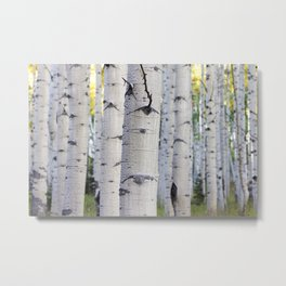 Colorado Aspen Grove Metal Print