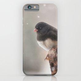 Winter Birds - Junco iPhone Case