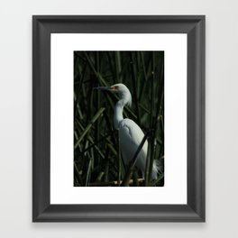 Reeds and a Snowy Egret Framed Art Print