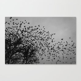 STARLINGS IN THE CITY Canvas Print