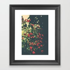 Summer Roses Series  - I -   Framed Art Print