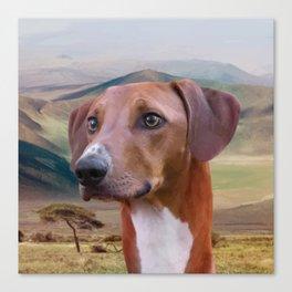 Azawakh Sighthound Canvas Print