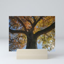 Secular oak tree in autumn. Tuscany. Mini Art Print