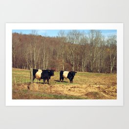 Two Oreo Cows on the Hill, Staring at You Art Print