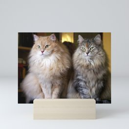 Mr. Cesare and Queen Cleopatra. Siberian cats Mini Art Print