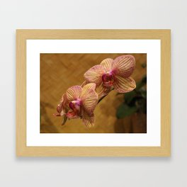 Orchids I Framed Art Print