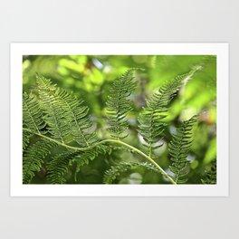The Lively Ferns Art Print