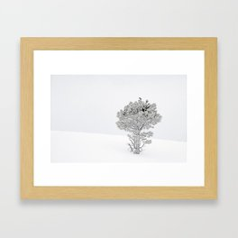 Bird in a Tree78 Framed Art Print