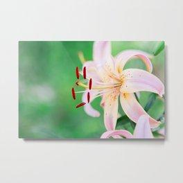The Peach Lilies Metal Print