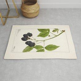 Blackberries (Rubus subg Rubus Watson) (1904) by Deborah Griscom Passmore Rug