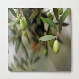 Olives On A Branch Metal Print