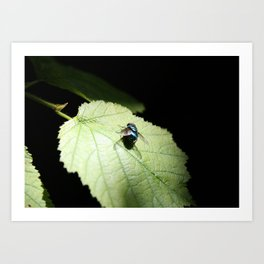 Flies can be pretty too Art Print