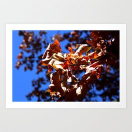 Crisp Fall Leaves Art Print
