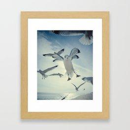 Seagull {Four} Framed Art Print