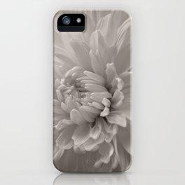 Monochrome chrysanthemum close-up iPhone Case
