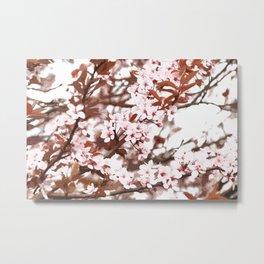 spring flowers pink Metal Print
