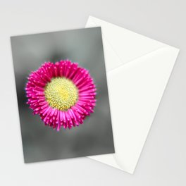 Blossom from a Daisy Isolated on Gray Background Stationery Cards