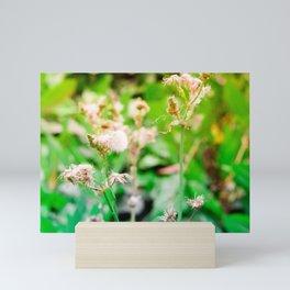 Nature photography dandelion II Mini Art Print