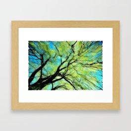 Sunny Canopy Top Framed Art Print