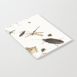 Insects, frogs and a snail Notebook