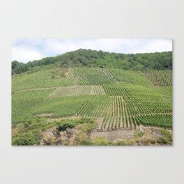 Vineyards 3 Canvas Print