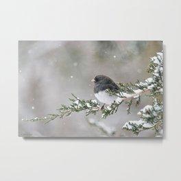 Snowbird on a Snowy Branch (Junco) Metal Print
