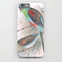Vintage Print - The Birds of Australia (1910) - Paradise Parrot iPhone Case