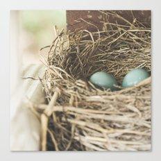 Robin Eggs in nest Canvas Print