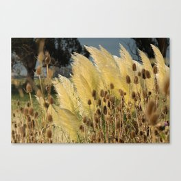 Tails of fox and thistles in the pampas. Canvas Print