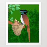 Paradise Flycatcher Art Print