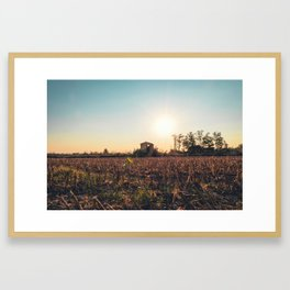 Corn field at sunset in the countryside of Lomellina Framed Art Print