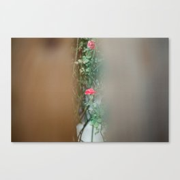 The Last Rose. Canvas Print