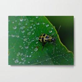 Bug in the Dew Metal Print