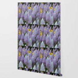 Australian Foxtail Flower Wallpaper