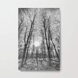 The Snow Forest  Monochrome Art Metal Print