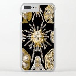Ernst Haeckel Echinidea Sea Urchin Clear iPhone Case