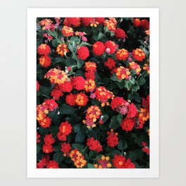 A Bush of Lantanas Art Print