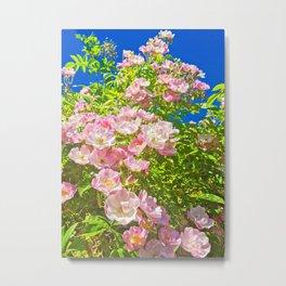 Sun Soaked Roses Metal Print
