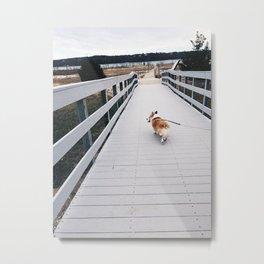 Corgi Metal Print