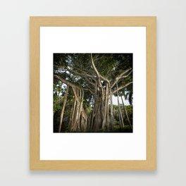 Banyan Tree at Bonnet House Framed Art Print