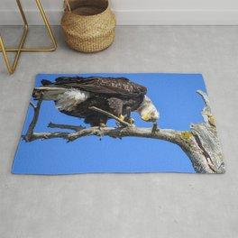 Alaskan Adult Bald_Eagle - Quizzical Rug