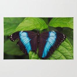 Banded Blue Morpho (𝘔𝘰𝘳𝘱𝘩𝘰 𝘢𝘤𝘩𝘪𝘭𝘭𝘦𝘴) Rug