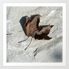 old leaf IV Art Print