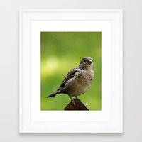 sparrow Framed Art Prints featuring sparrow  by Karl-Heinz Lüpke